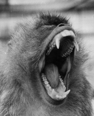 screaming monkey.jpg